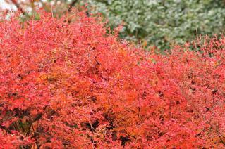 愛知県森林公園 植物園