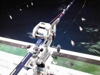電気釣り 竿.jpg