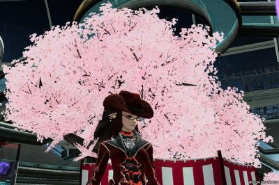 桜きれいですね