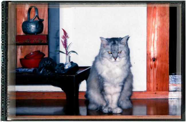 Antique Thai Cats