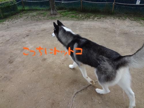 DSC03769.jpg