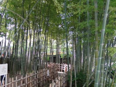 大横川親水公園の竹林