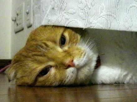 起きてる)