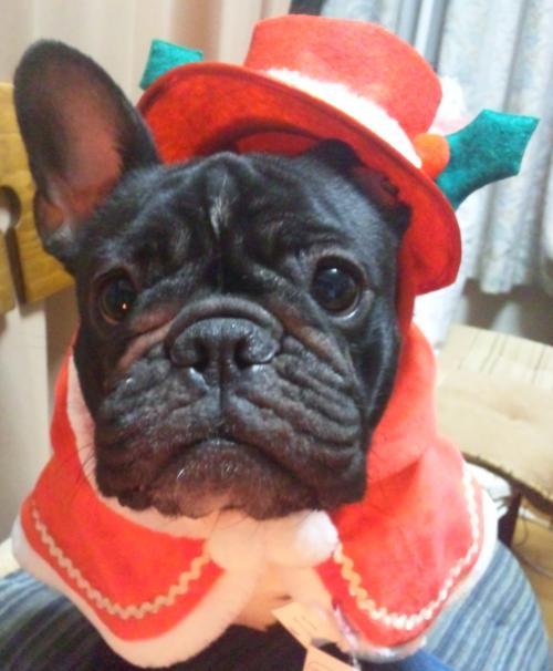 姫乃クリスマス