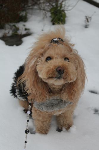 雪を求めて…滋賀