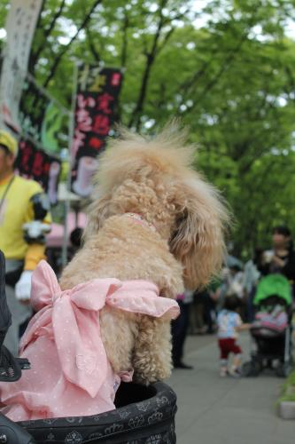 靱公園バラ祭2013