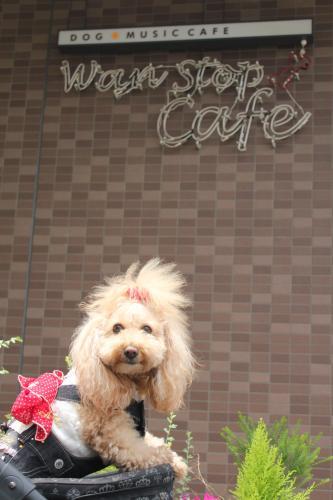 Wan stop cafe