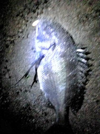 2012_0804_024639AA.jpg
