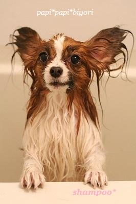 shampoo♪