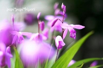 ハルの花☆