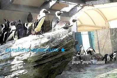 ペンギン★いっぱい