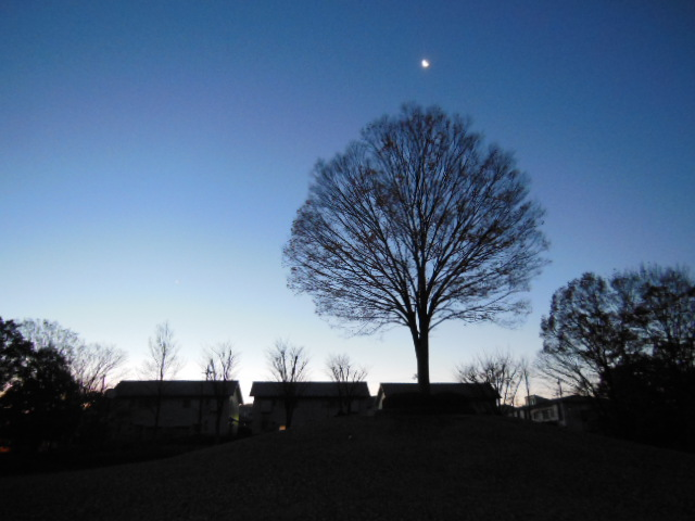 月とけや木 002