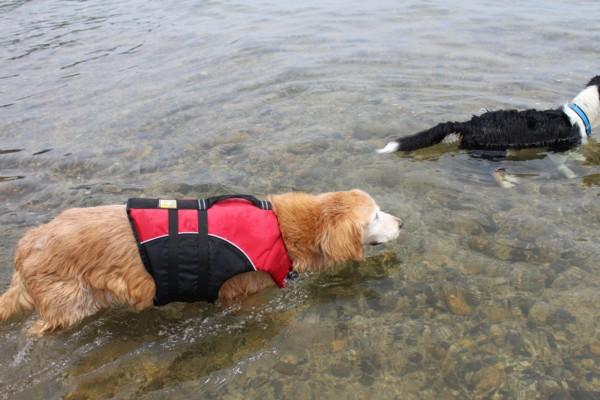 パーちゃんも泳ぐよ