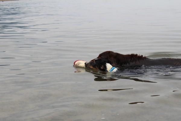 アロマハ泳ぐ2