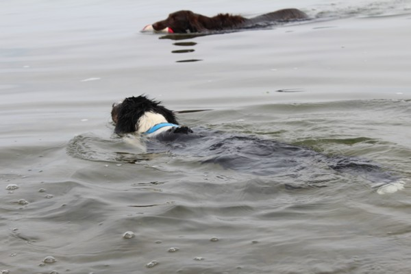 アロマハ泳ぐ1