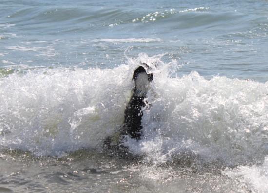 波もへっちゃらだい