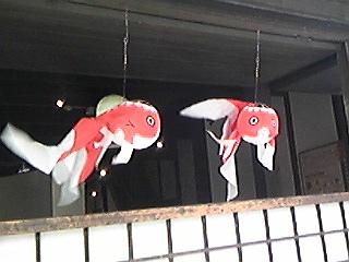 120521金魚ちょうちん