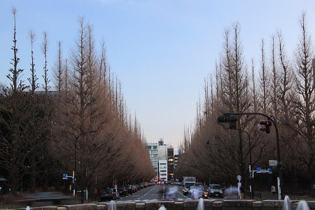 ポポーの木