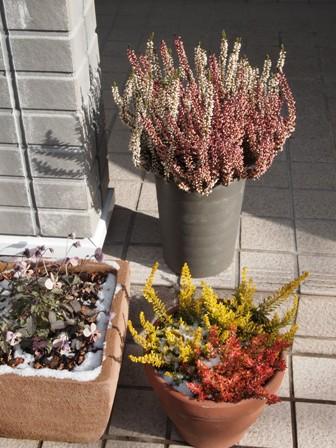 my-garden 065