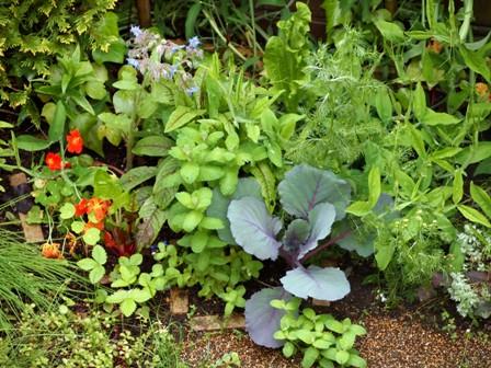 my-garden 009 (6)