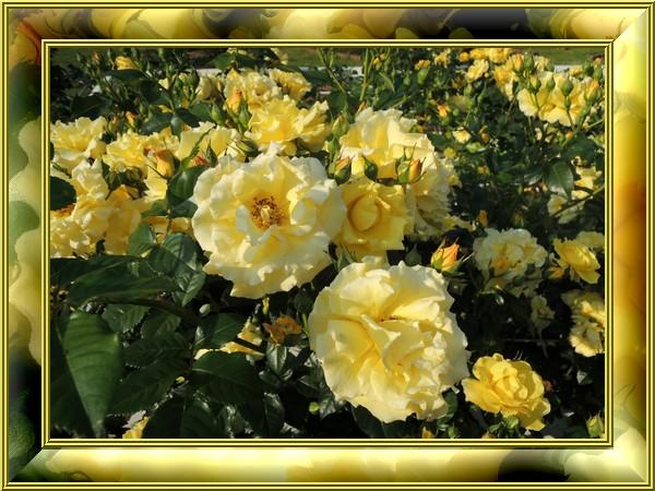Eber Gold