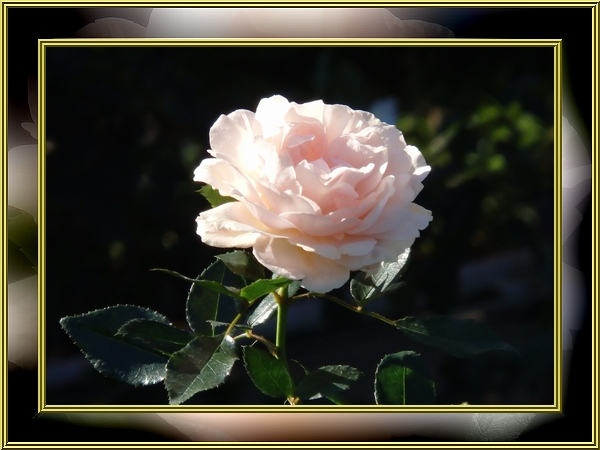 Garden of Roses1
