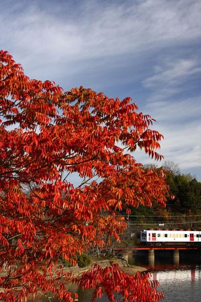 2009年12月中旬 和歌山電鐵貴志川線 大池遊園