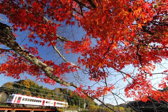 2010年12月上旬 和歌山電鐵貴志川線 大池遊園