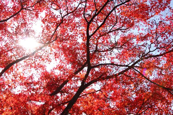 2011年12月上旬 和歌山電鐵貴志川線 大池遊園