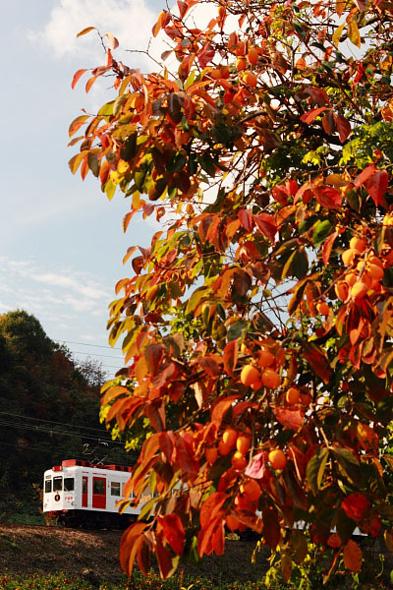2009年11月下旬 和歌山電鐵貴志川線 山東~大池遊園