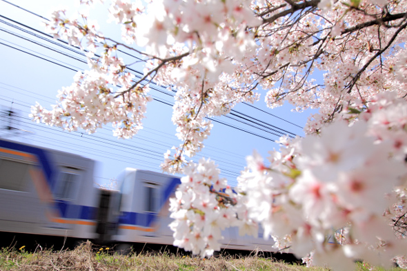 2013/4/5 南海高野線 狭山~大阪狭山市