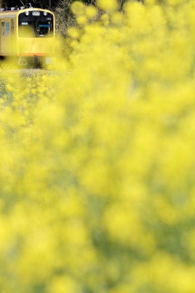 2013/4/13 三岐鉄道北勢線 楚原~麻生田