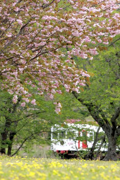 2013/4/20 和歌山電鐵貴志川線 大池遊園