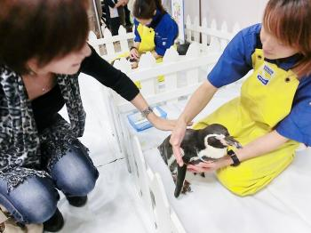 mi-penguin.jpg