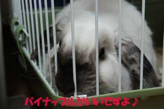 sakura 20121220 002
