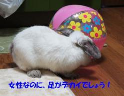 sakura 20121221 001