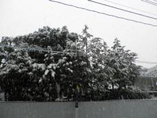 20130114 初雪