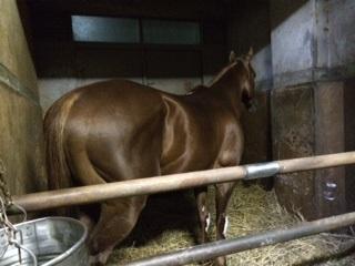 Ponyo20141112-2.jpg
