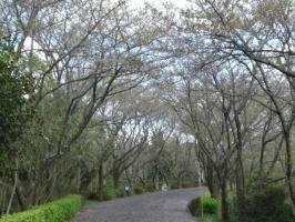 きんぶち公園1