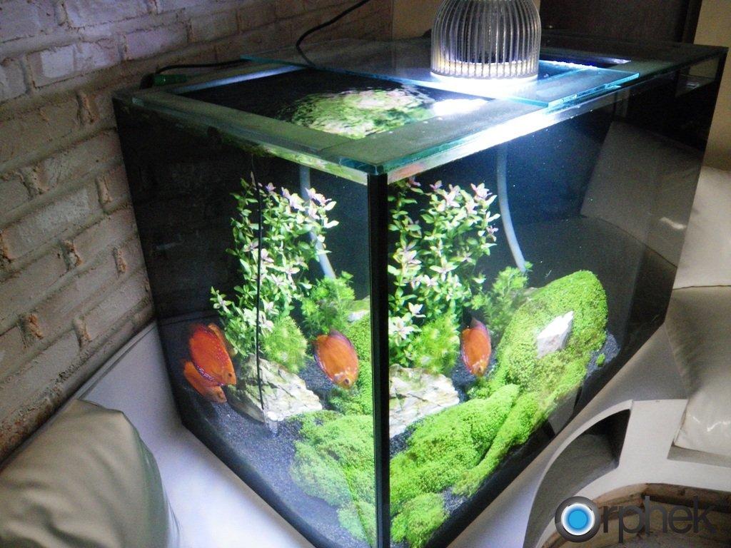 planted-aquarium-0.jpg