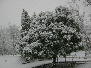 snow1_130114.jpg