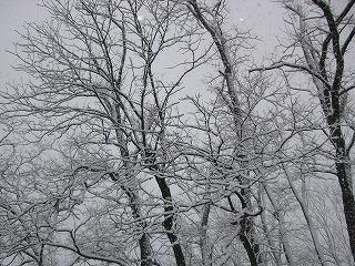 snow2_130114.jpg
