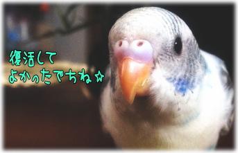pippi017.jpg