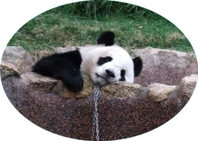 マカオ01パンダ