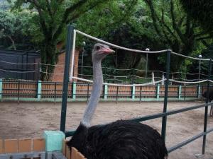 マカオ26パンダ公園