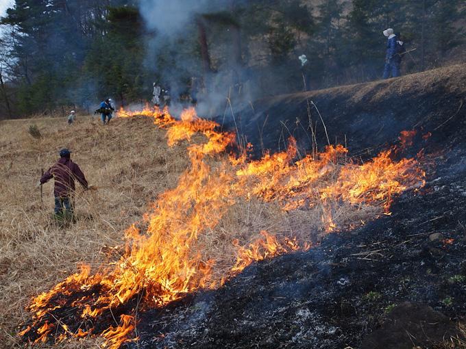 保全活動:チャマダラセセリ生息地草刈り