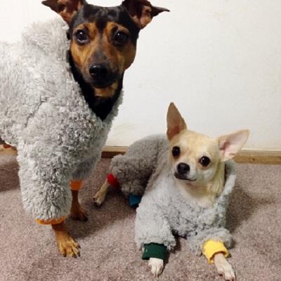 ロッキー&リリー1