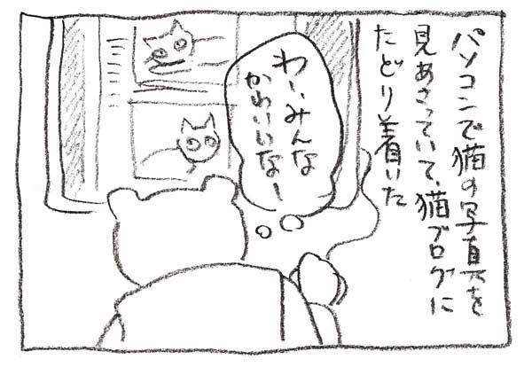 11-猫ブログ