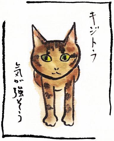 7_きじとら