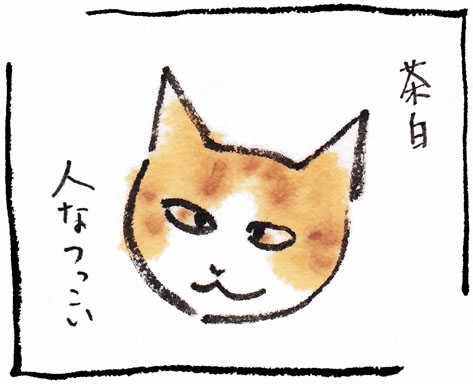 11_茶白